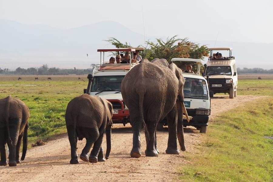 3 Days Amboseli Safari Package