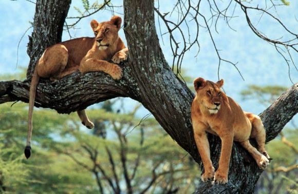 Best Overland Camping Safaris | Kenya, Tanzania, Central