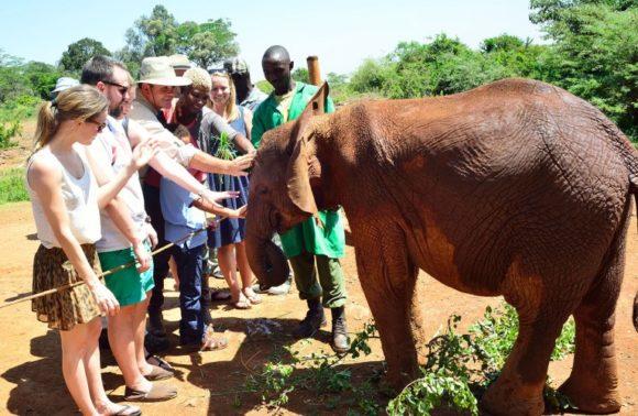 Giraffe Center, Elephant Orphanage & Bomas of Kenya Excursion