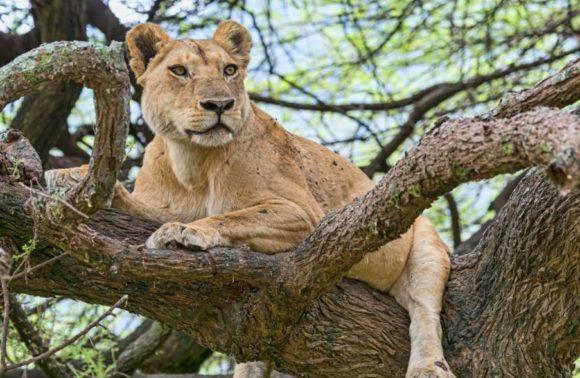 3 Days Lake Manyara & Ngorongoro Crater Safari