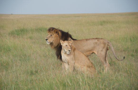 3 Days Masai Mara Safari Package