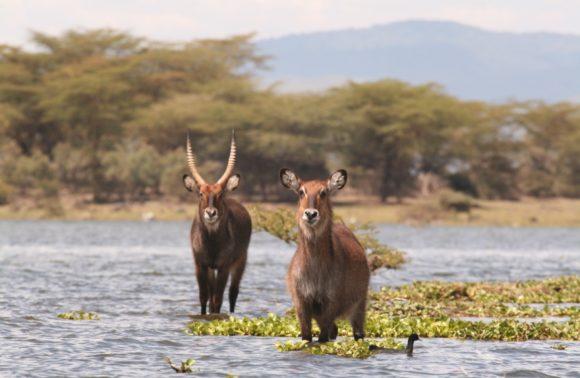 5 Days Sweetwaters, Naivasha & Masai Mara Tour