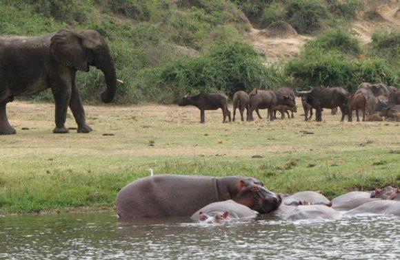 3 Days Uganda Safari to Queen Elizabeth National Park