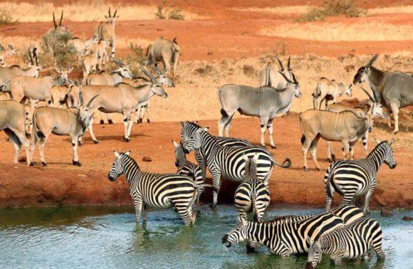 4 Days Amboseli & Tsavo West Safari Package