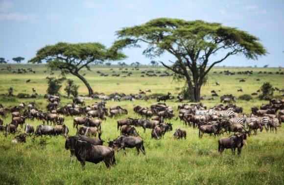 5 Days Lake Manyara, Serengeti & Ngorongoro Safari