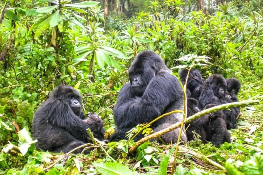 13 Days Kenya & Uganda Gorilla Overland Camping Safari